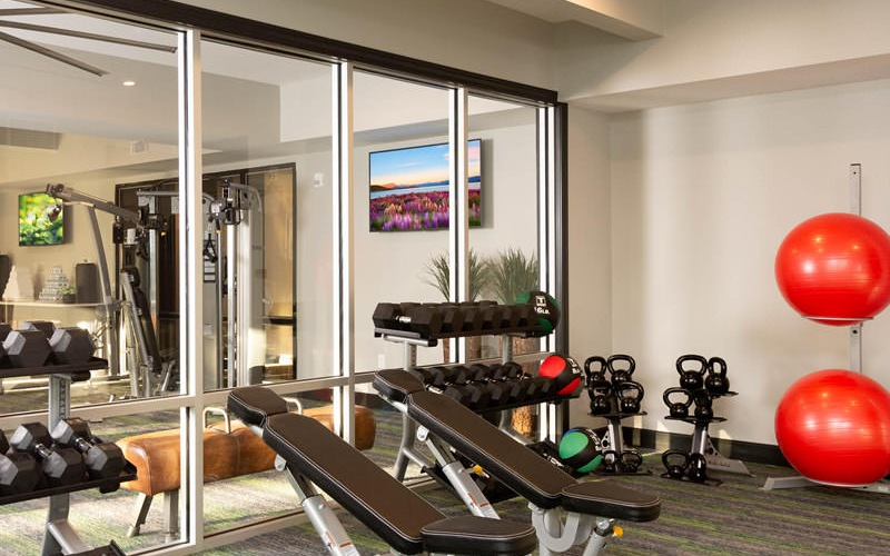 free weights and strength building equipment in bright fitness center